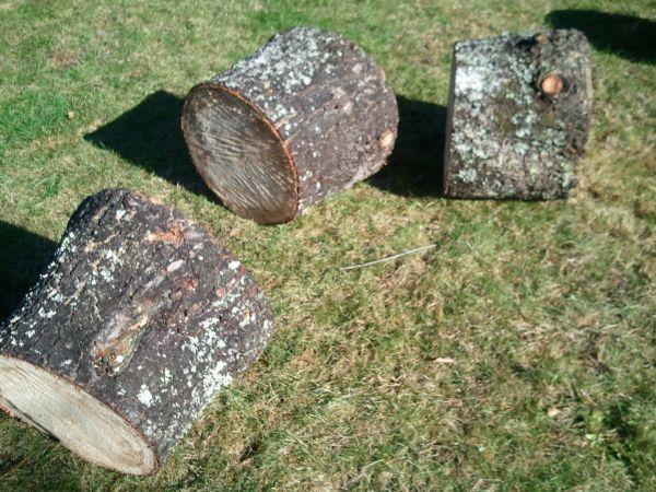 Pine-Cut Firewood (Buxton) & This week in Craigslist Maine | PenBay Pilot