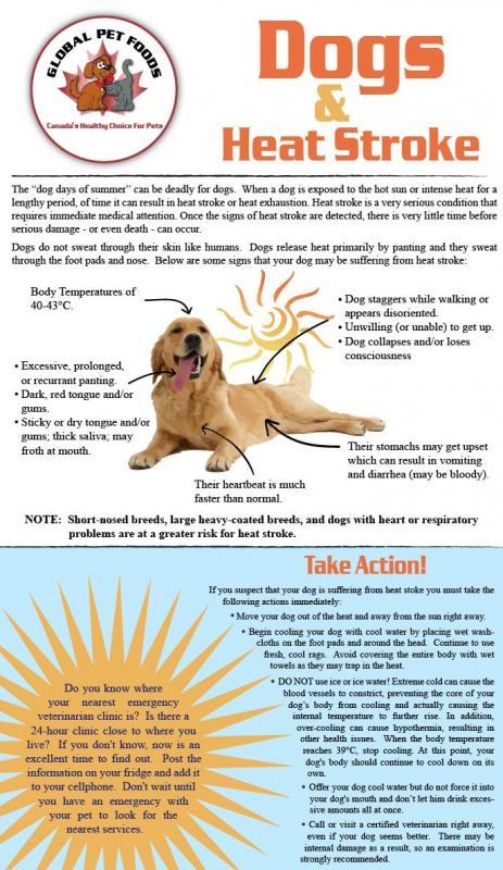 Can Heat Cause A Seizure In A Dog