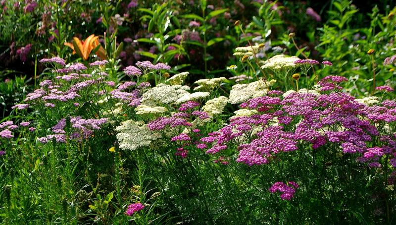 Vibrant blooms, peaceful ambiance welcome guests to Brooks garden on ...