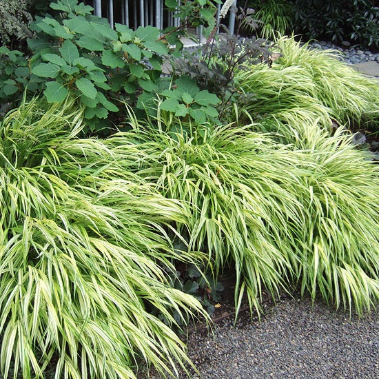Hammond buck talks ornamental grasses at next garden club for Low growing perennial grasses