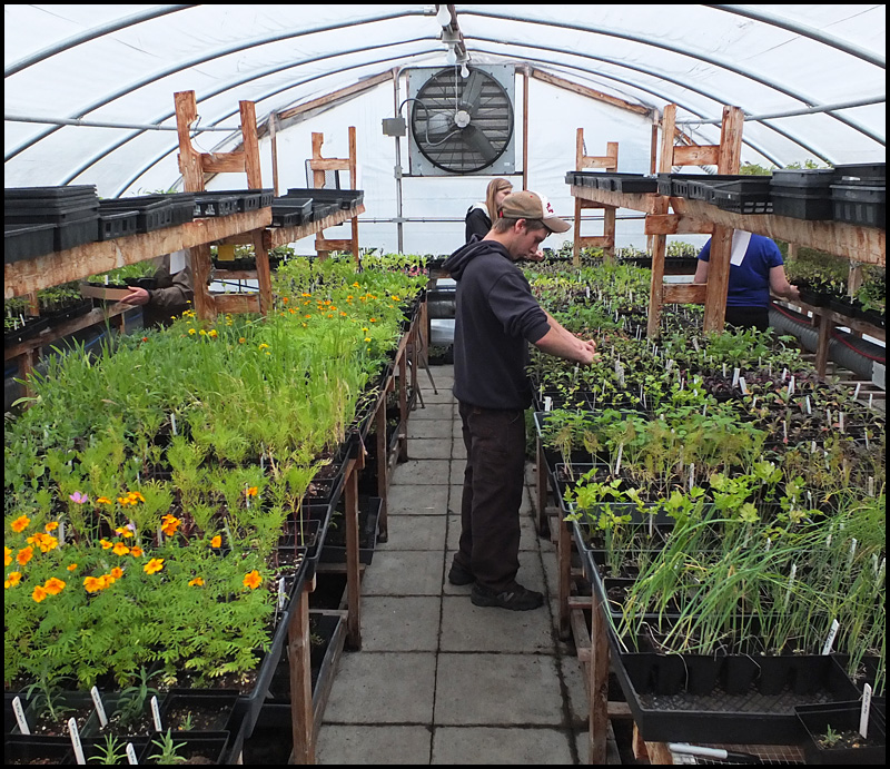 Good Day To Get Your Plants: Thomaston, Rockland And