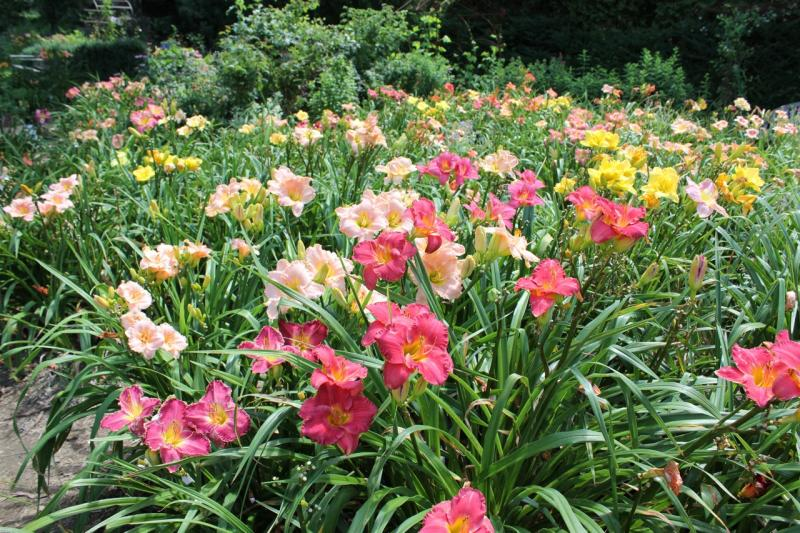 LINCOLNVILLE U2014 Susan Shaw Will Present U201cDaylilies And Companions: Four Season  Gardening In The Midcoastu201d On Wednesday, June 4 At 7 P.m. At The  Lincolnville ...