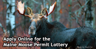 Apply now for the 2016 Maine moose permit lottery | PenBay ...