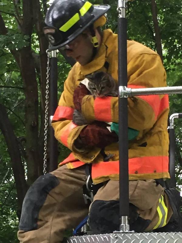camden firefighter rescues cat stuck in tree