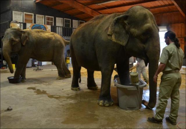 Water For Elephants Rosie