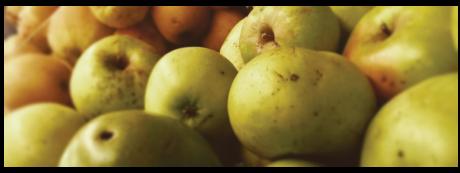 heritage Maine apples