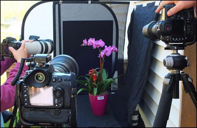 Cameras focus on the still life of an orchid. (Photos by Chris Wolf)