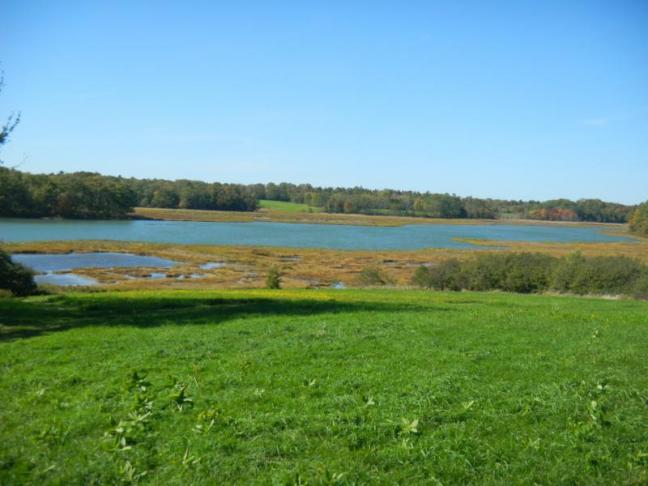Public invited to forum on weskeag marsh conservation for Maine fish wildlife