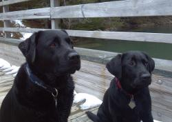 two salty dogs pet outfitters boothbay harbor maine