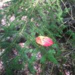 fall coming