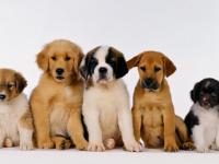 Puppy, dog, classes, mid-coast, positive trainer, fun